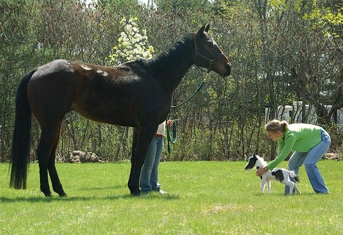 History of the Einstein Horse
