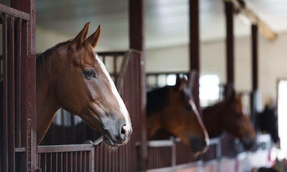 Horse dealers