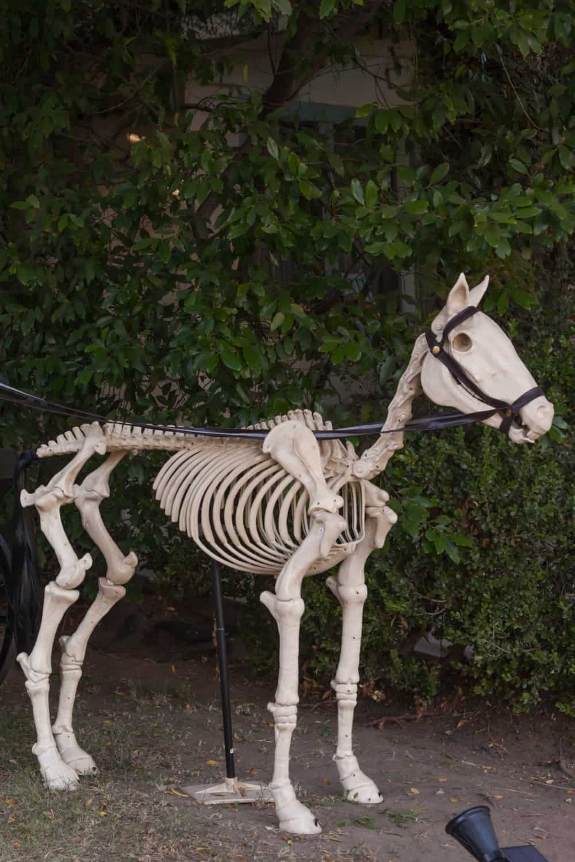 Horse skulls have more than twice as many bones as human skulls …