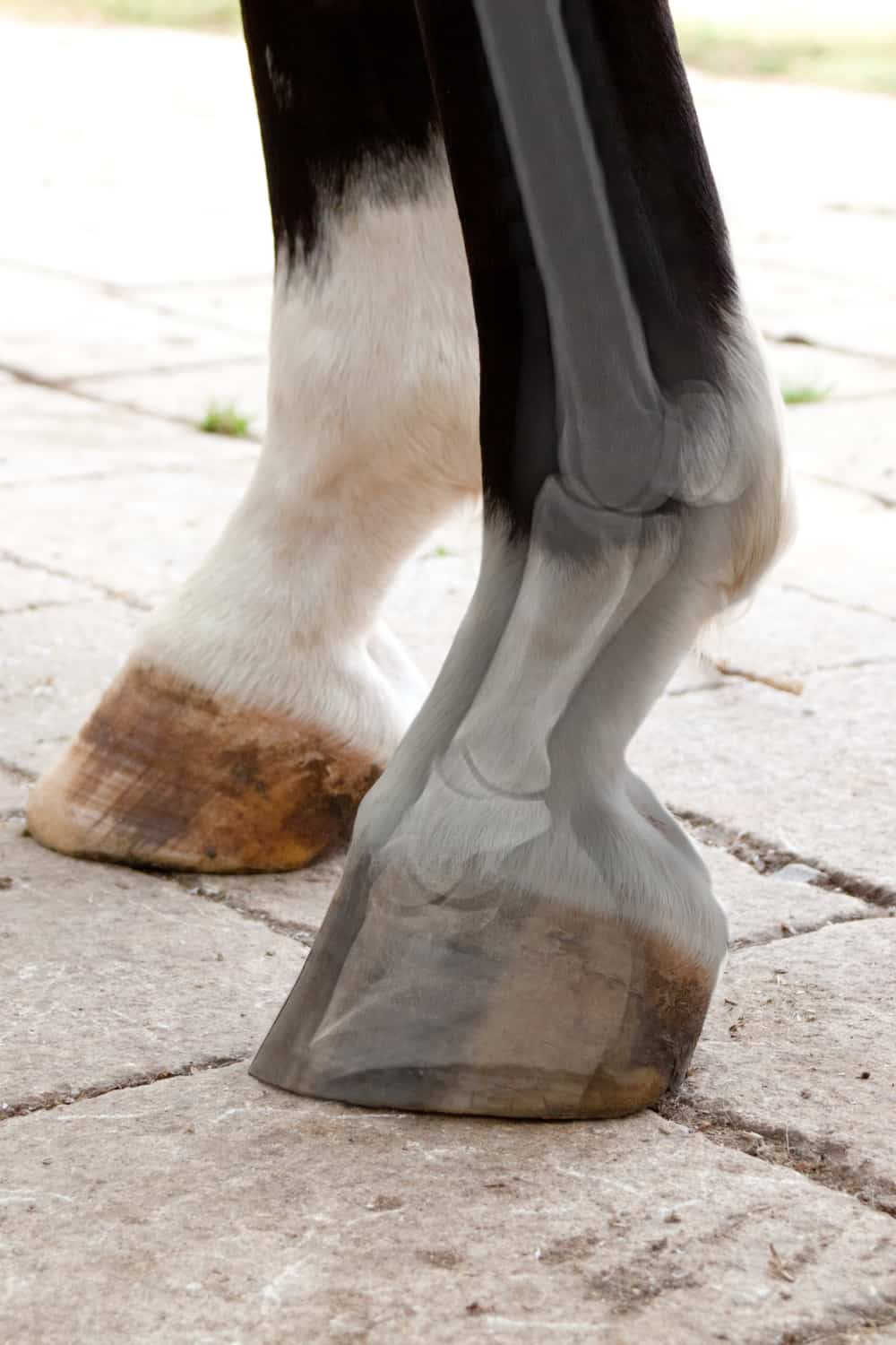 """Horses have a """"middle finger"""" in their hooves"""