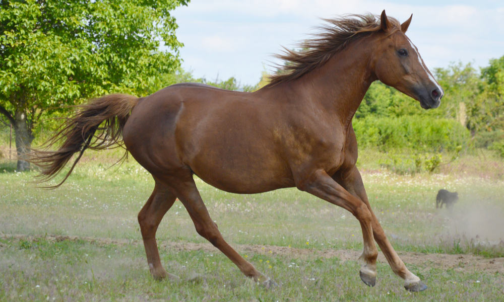 Horses usually have 54 vertebra