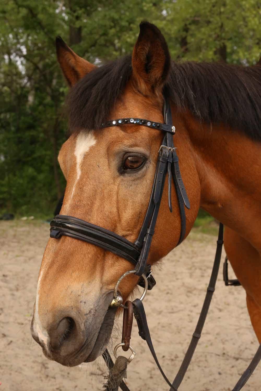 Horses' vision influences their behavior