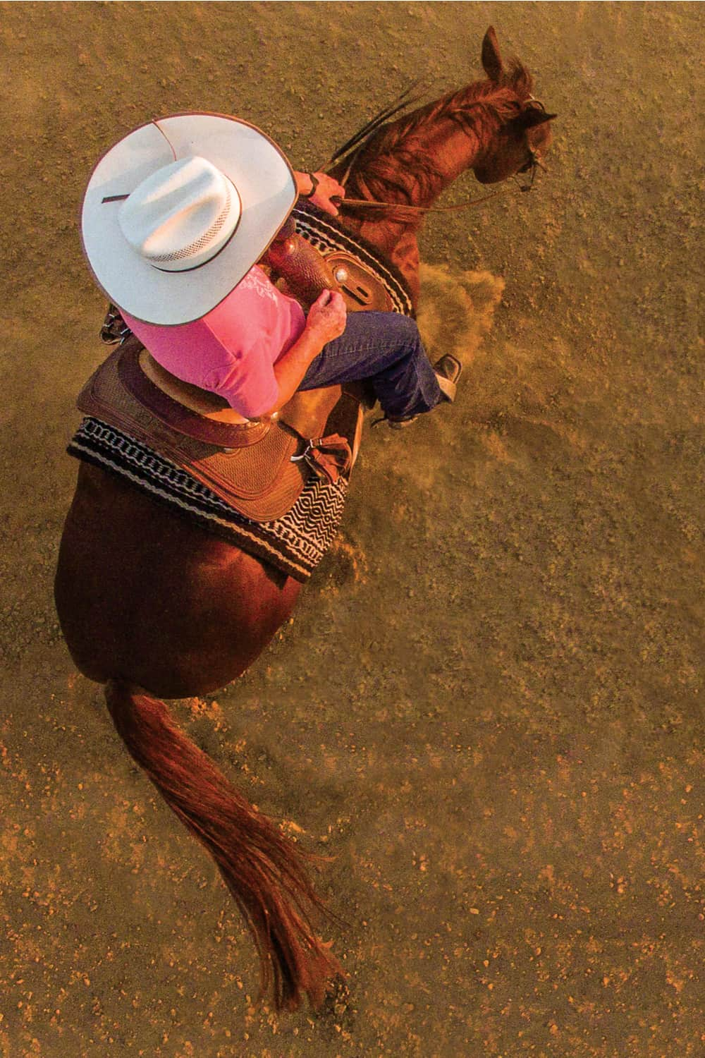 How Much Does It Cost to Train a Cutting Horse