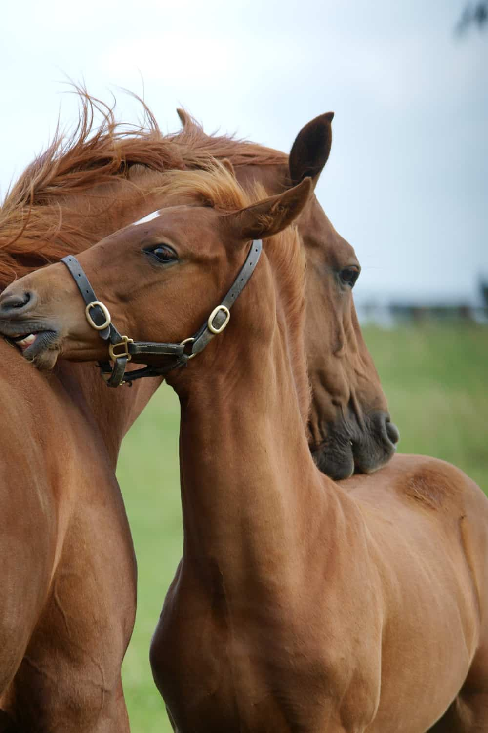 How Should You Feed Your Filly