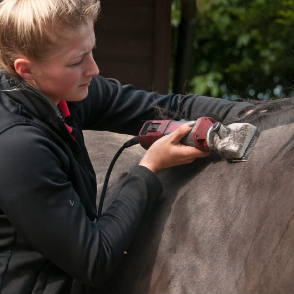 How to Body Clip a Horse? (Step by Step Guides)