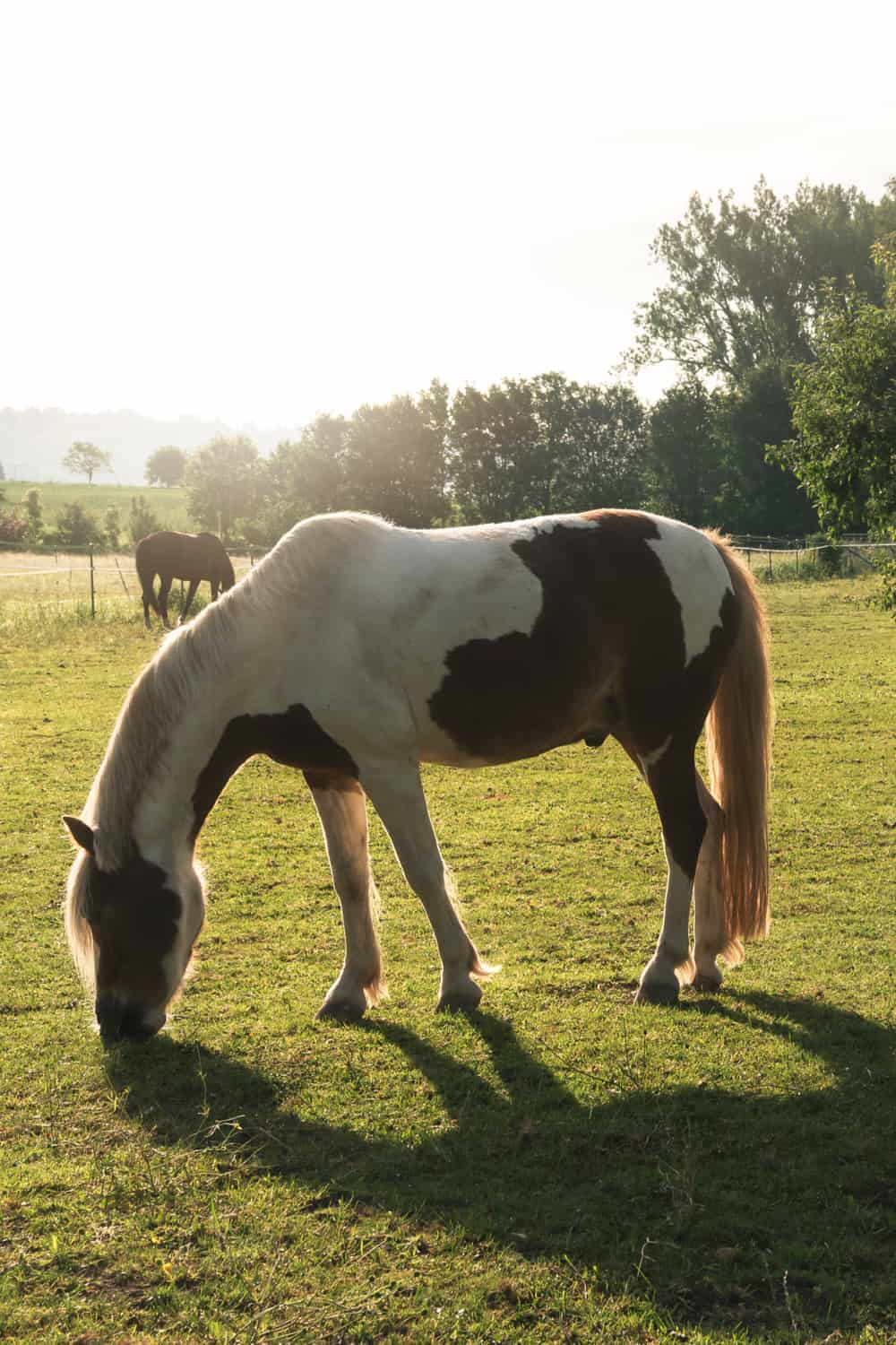 How to Take Care of Your Pinto Horse