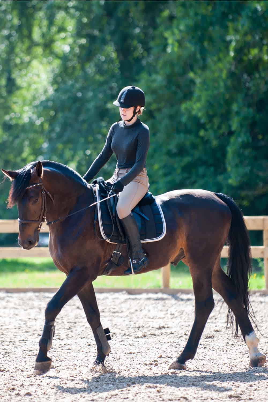Learn Basic Horseriding
