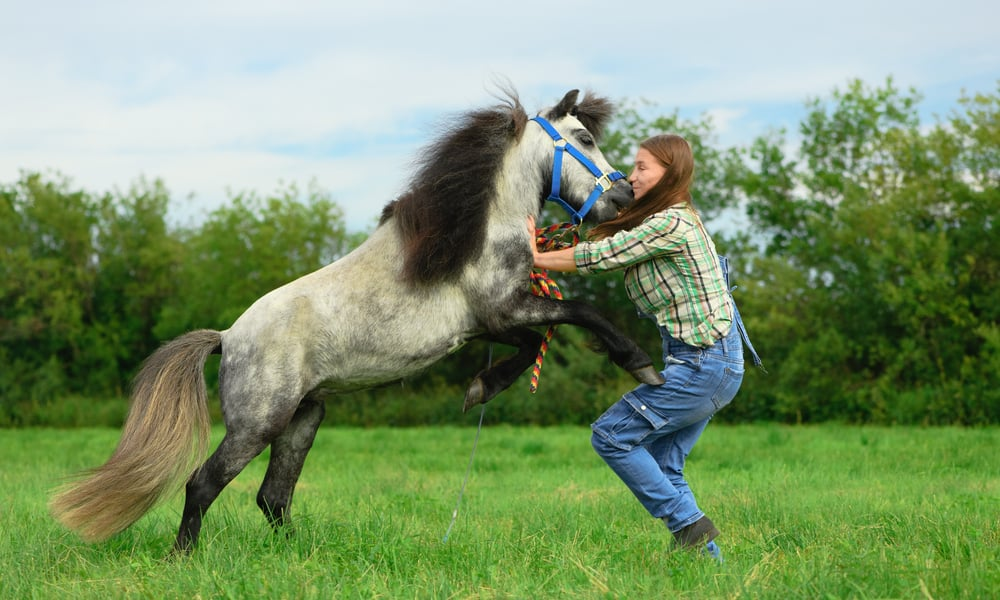 Learn Horse to Lunge