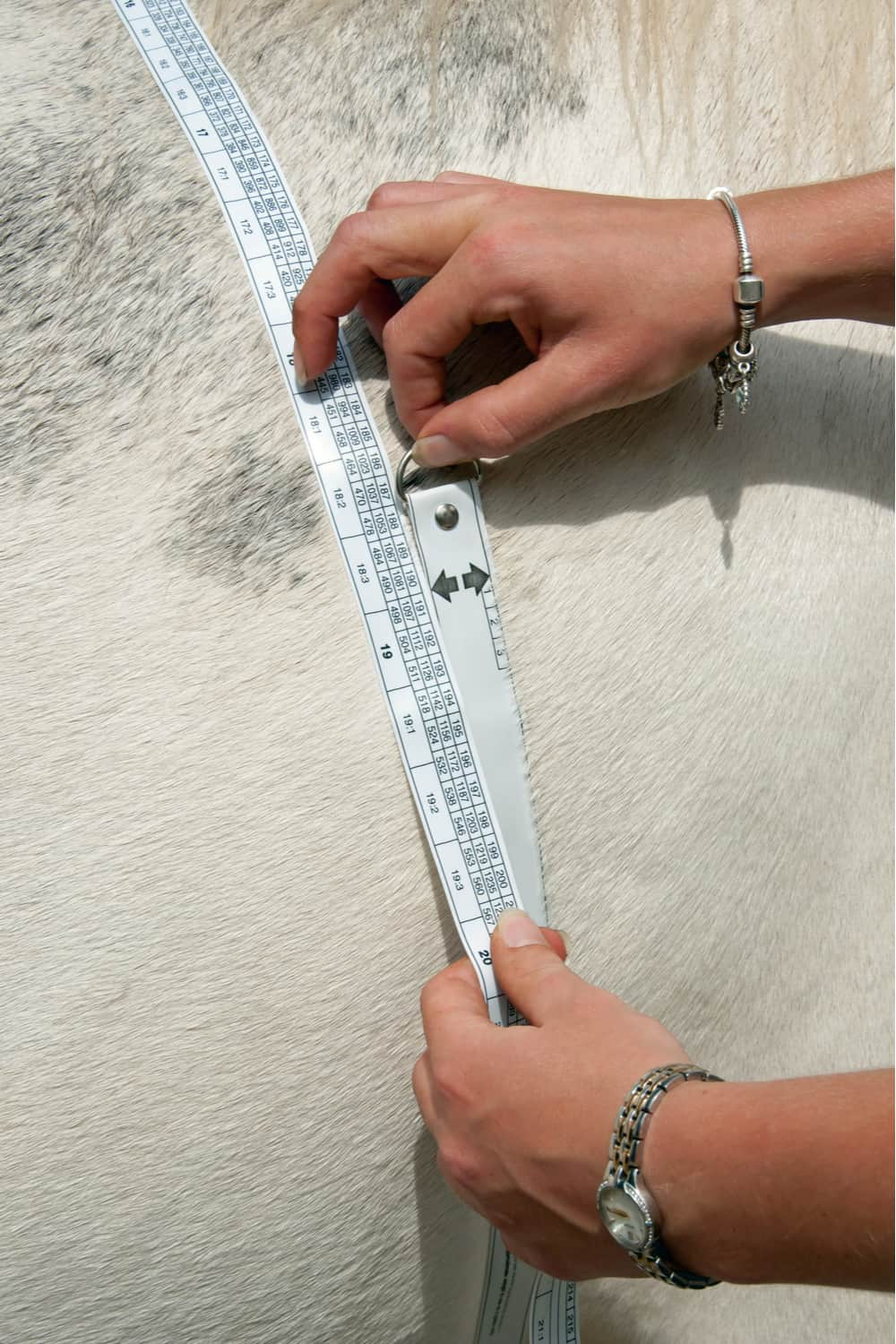 Measuring Horse Weight