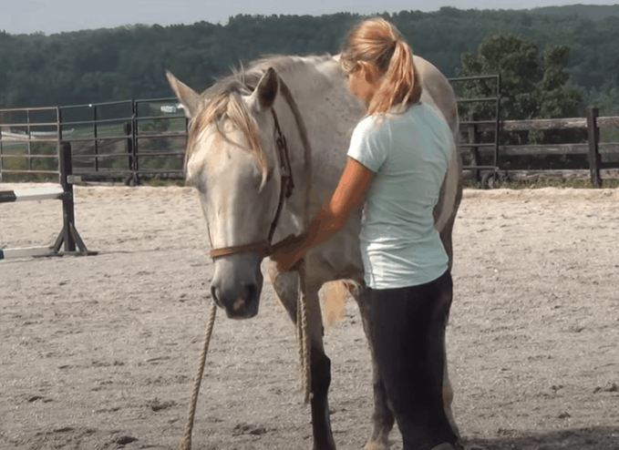 Pet and Relax the Horse
