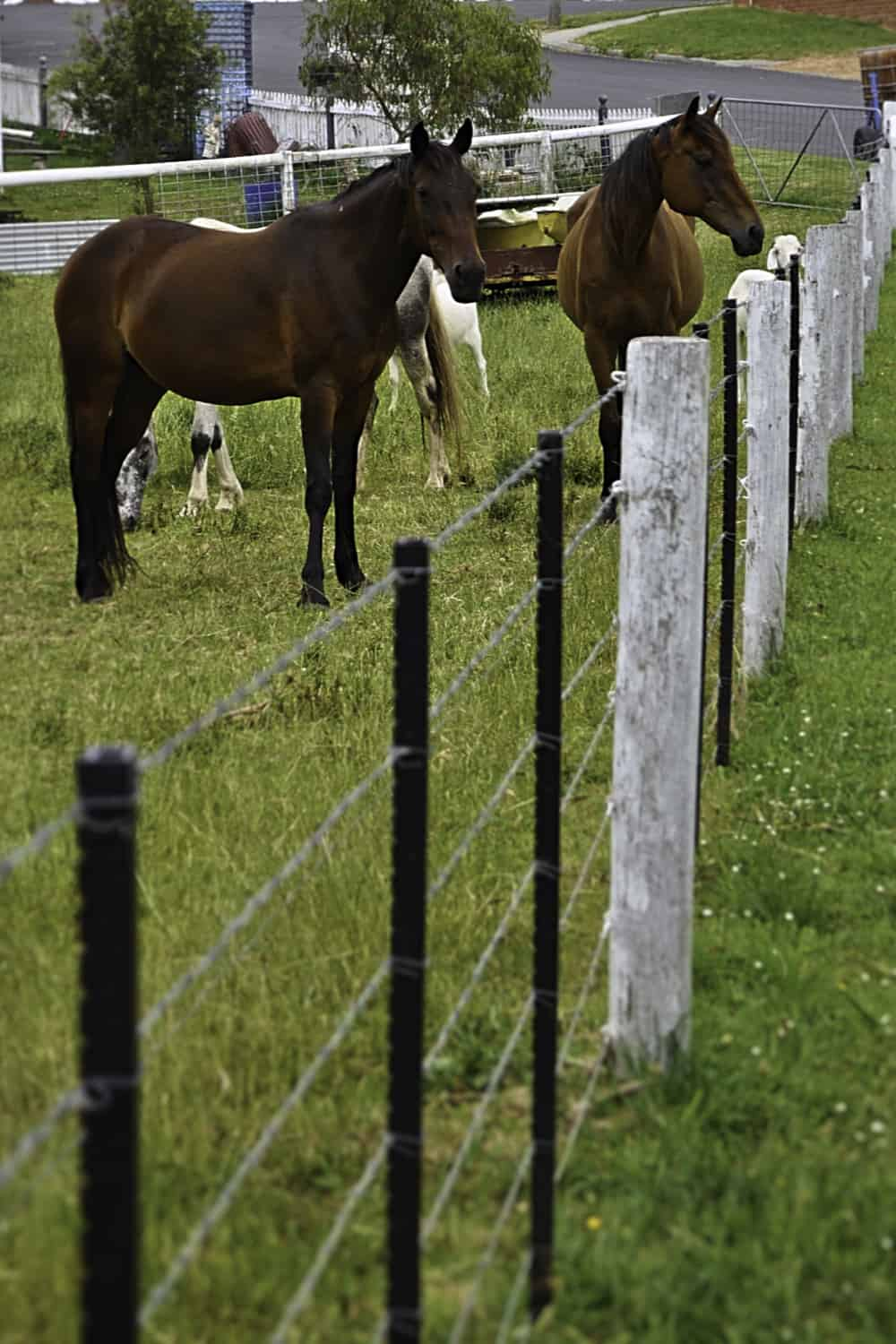 Post and wire fencing