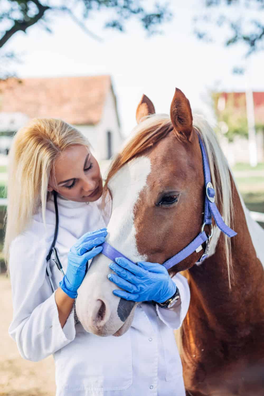 Preserve Horse Mental Balance