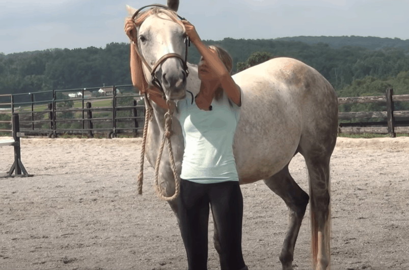 Put the Halter Around the Horse's Head