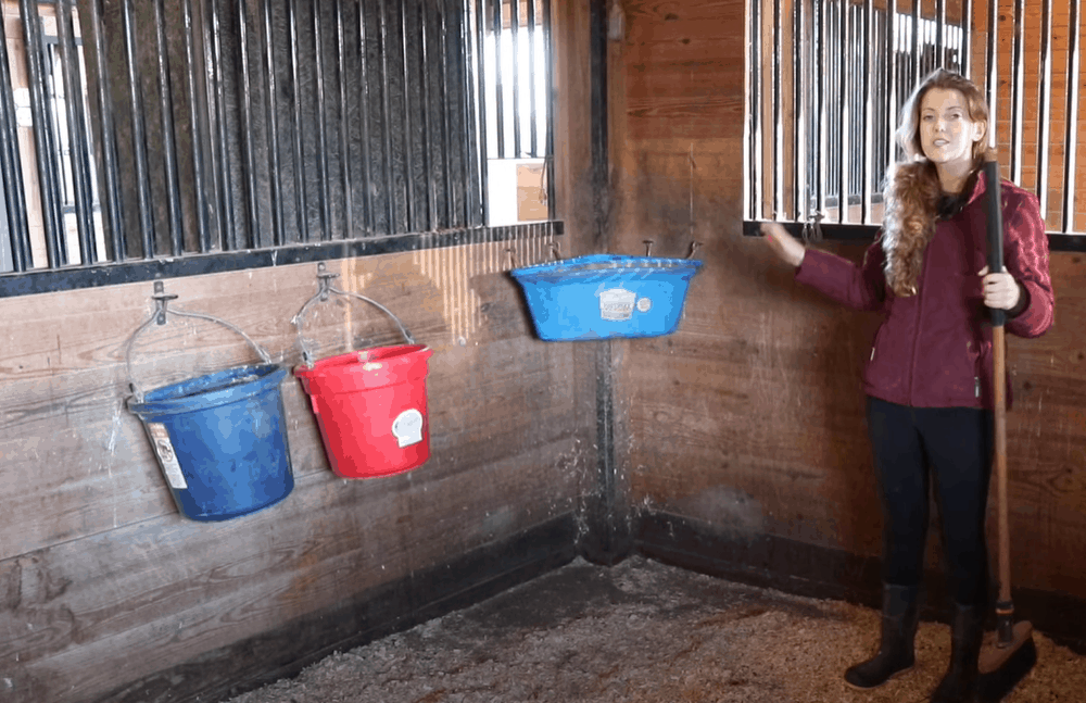 Replace feed and water buckets and toys
