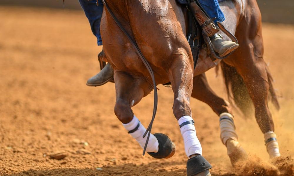 Shorten the horse's strides with half halts