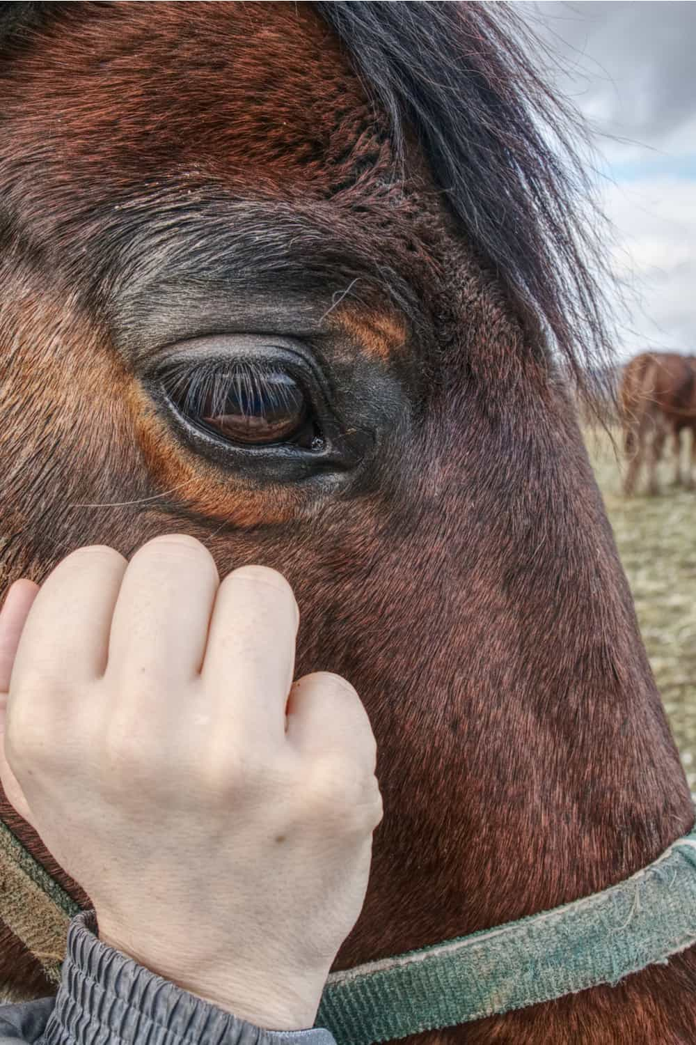 Signs of Dehydration in a Horse