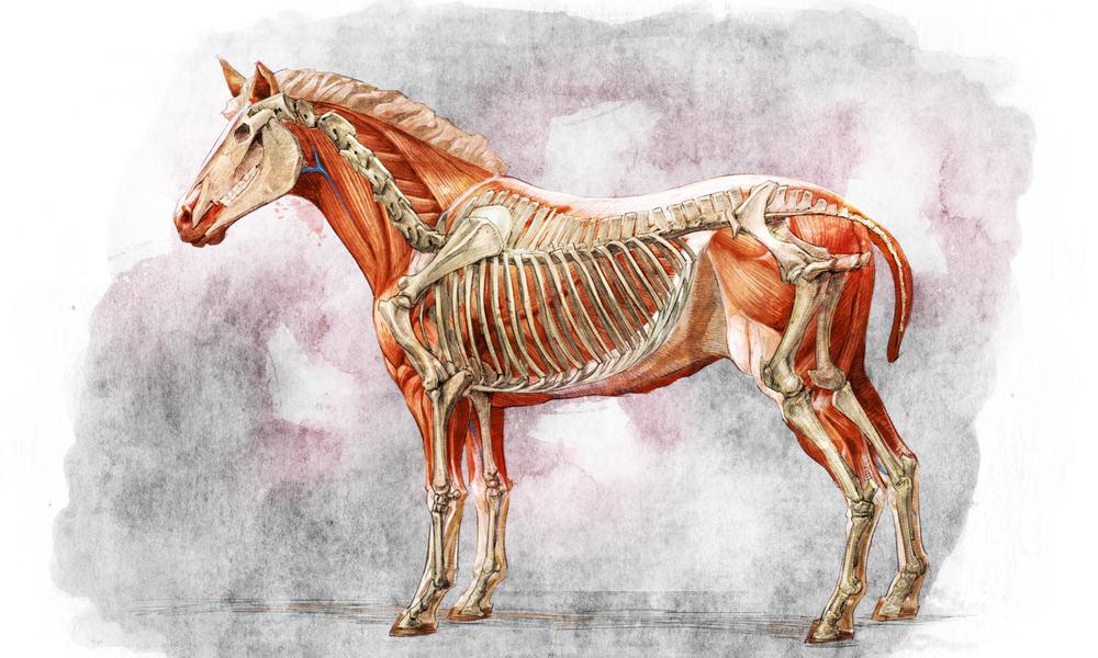The skeleton has three main functions