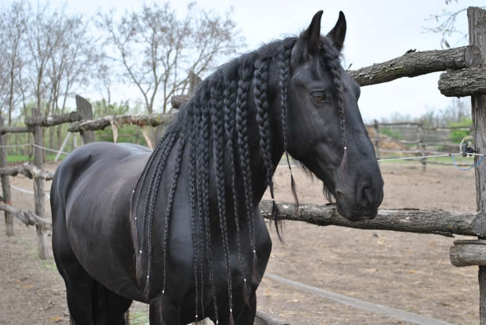 There are lots of different styles of braids