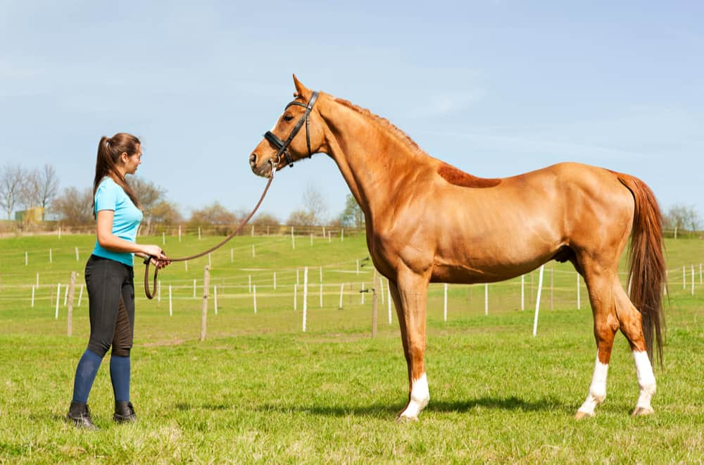 Thoroughbred Trainers Income