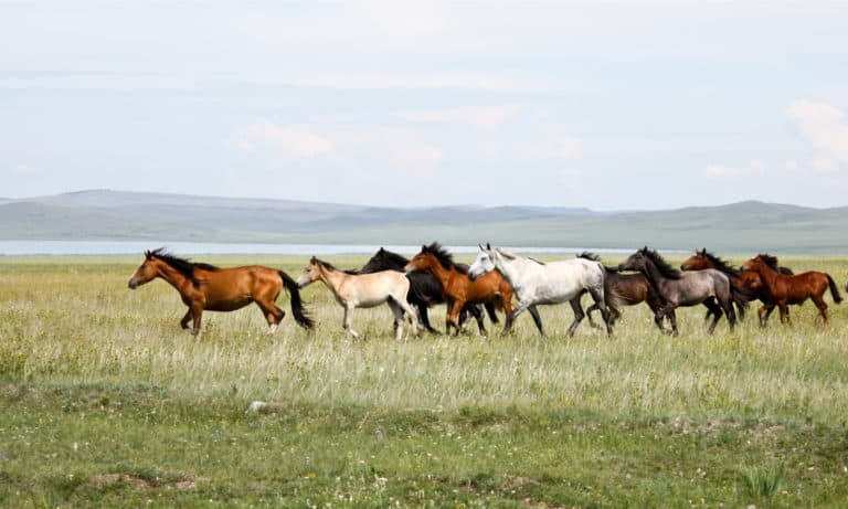 Top 10 Wild Horse Breeds In the World