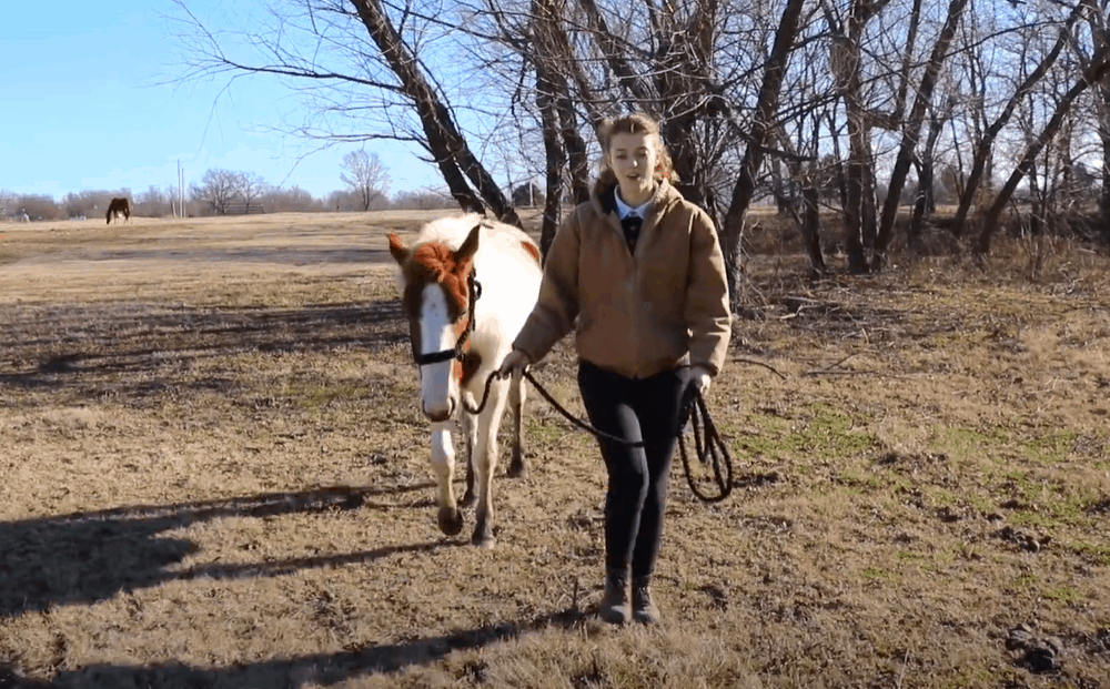 Use the lead rope to cue the horse to walk forward