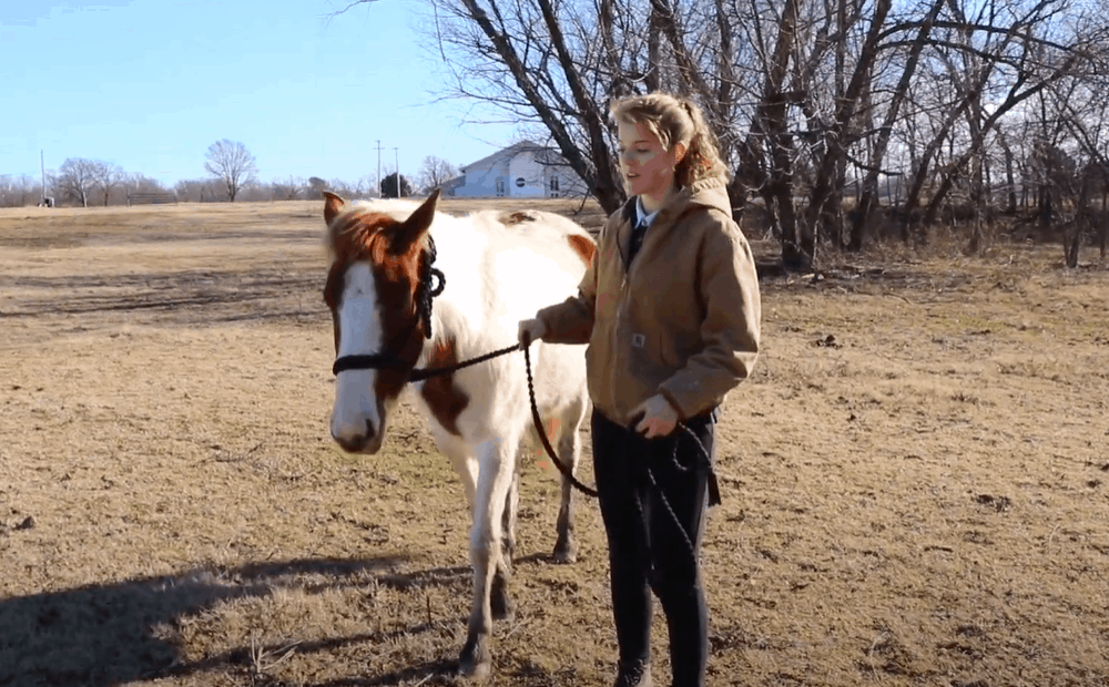 Use verbal cues to lead your horse