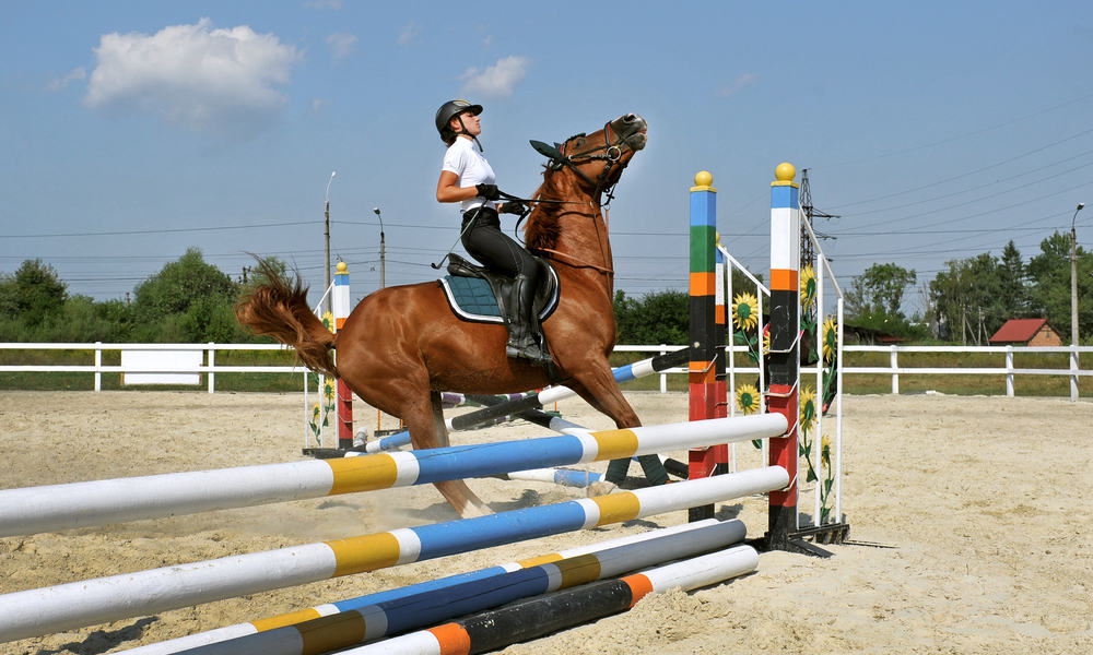 Use verbal cues to stop the horse