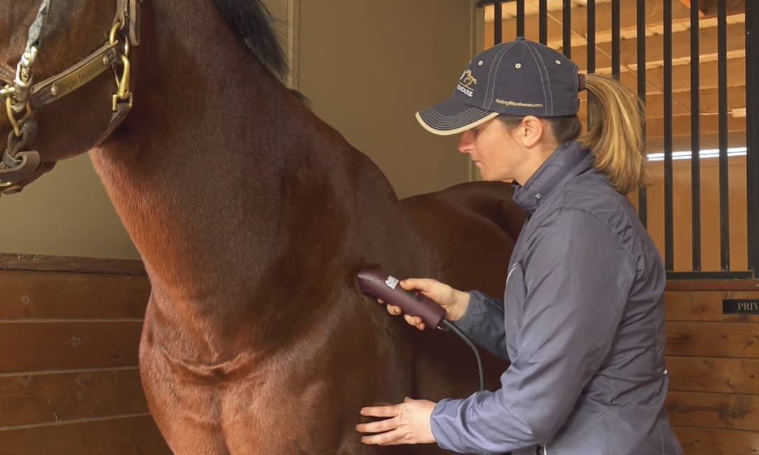 Valuable Horse Body Clipping Tips
