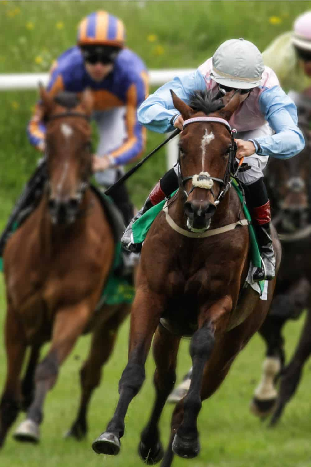 Ways for Racehorse Trainers to Make Money