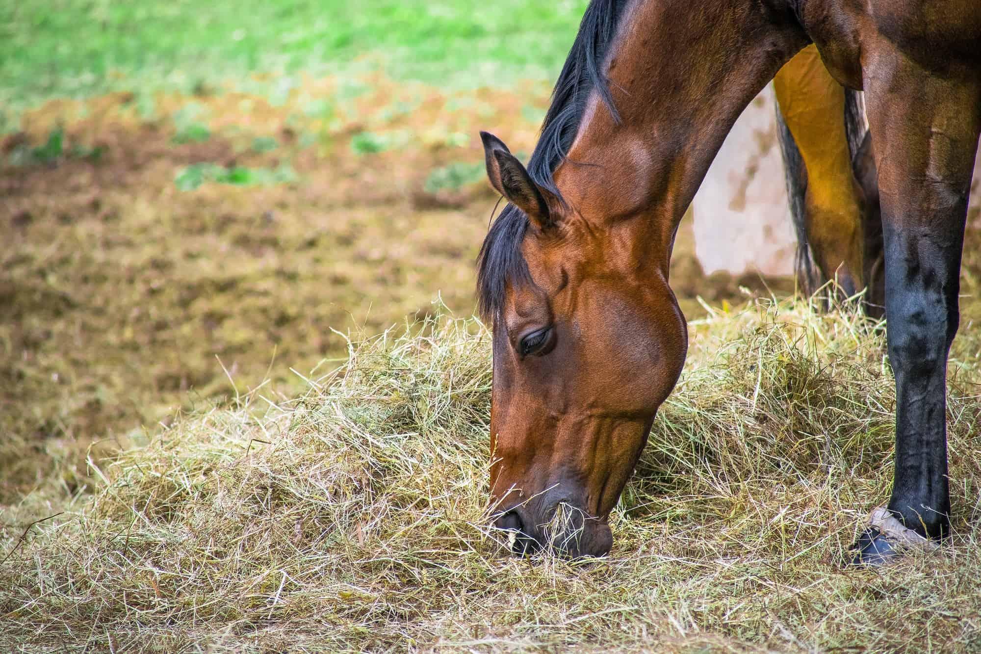 What Do Horses Eat