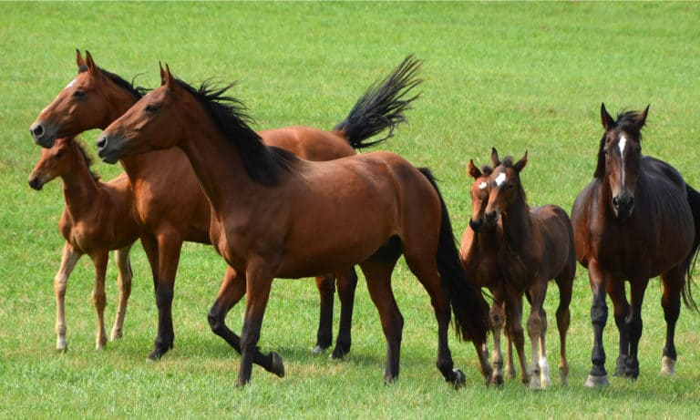 What Is A Grade Horse 10 Things You Must Know About Grade Horses