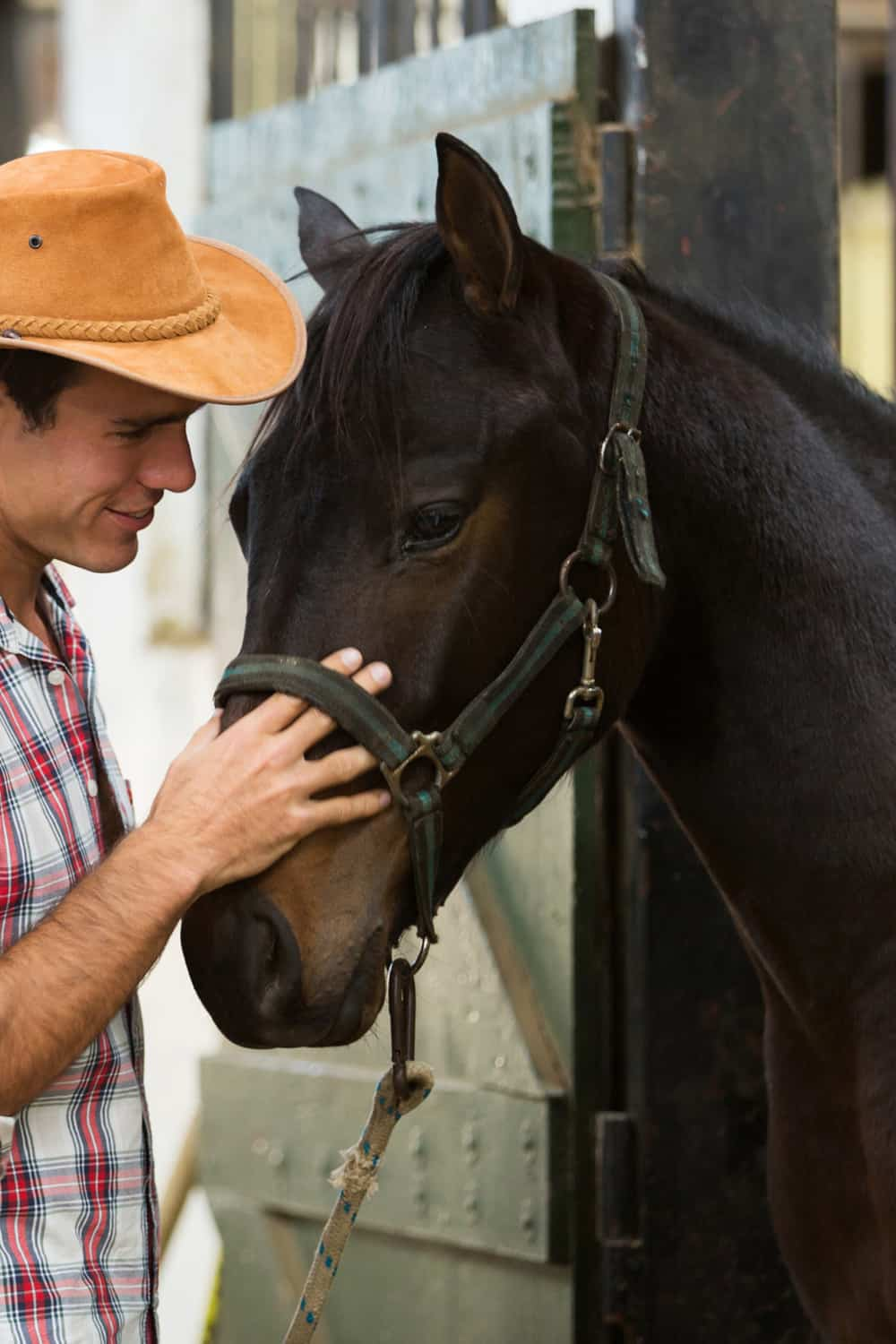 What Is a Horse Whisperer