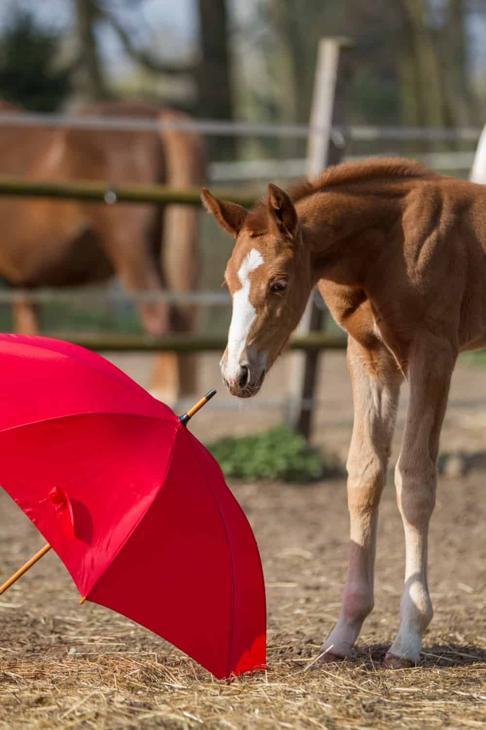 What are the Features of a Filly Horse