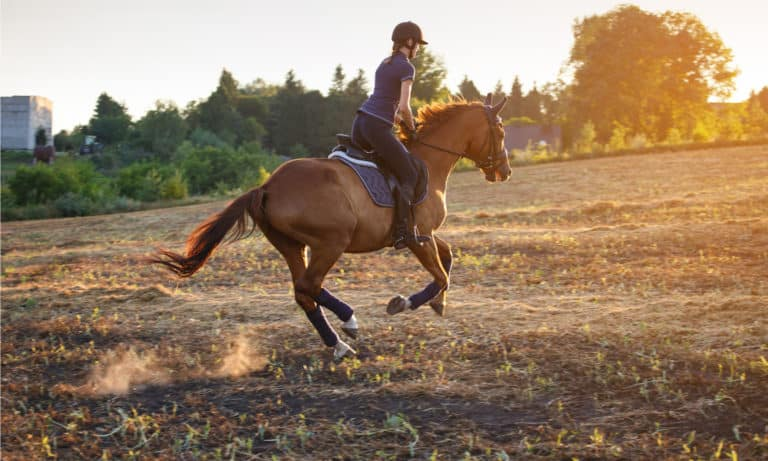 What is a Racking Horse (Origin, Color, Body Structure & Gait)