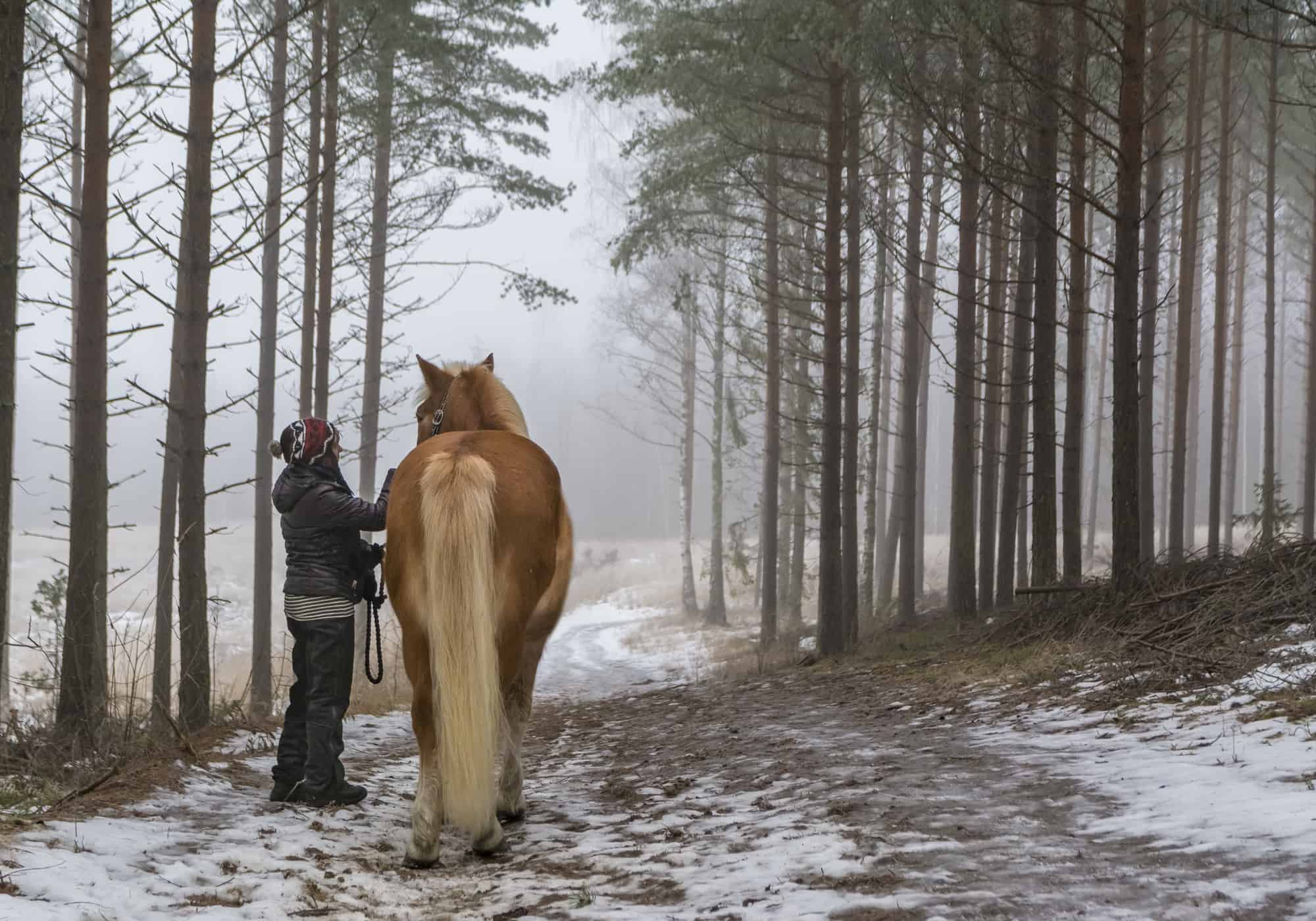 What's the Normal Temperature of a Horse (7 Easy Steps to Take)