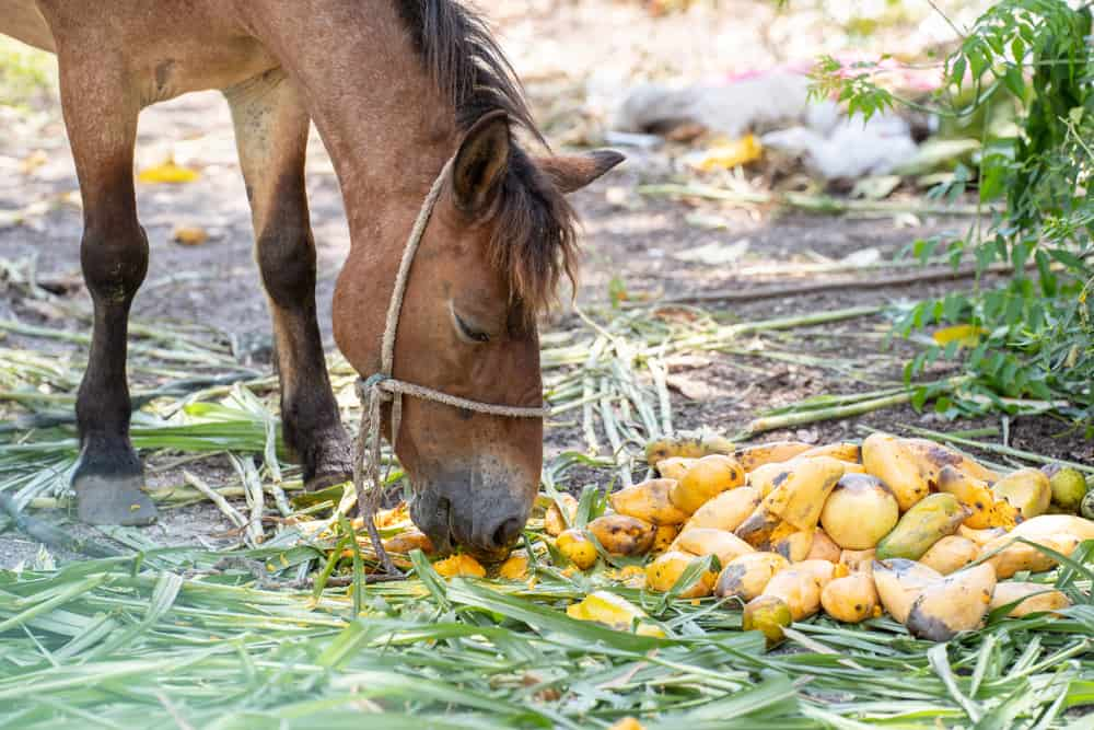 horse eat Fruit